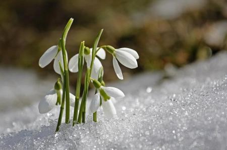 Nadchodzi wiosna
